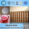 Pharmaceutical Grade Bp Low Acyl/High Acyl Gellan Gum Powder