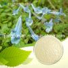 Corydalis Yanhusuo Extract Tetrahydropalmatine 98%