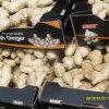 Golden Supplier for Chinese Fresh Ginger