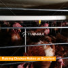Professional Automatic Poultry Birds Drinking Water System