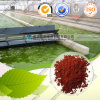 High Quality Natural Haematococcus Pluvialis Extract Astaxanthin