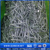 Galvanized Polished Common Nails with Factory Price