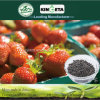 Kingeta Fertilizer Bamboo Charcoal Microbial Agent Promote Photosynthesis