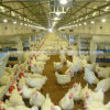 Full Set Poultry Control Shed Equipment for Chicken