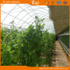 Widely Used Solar Greenhouse for Winter Use