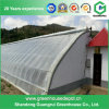 China Supplier Green House Film Greenhouse Good Height Insulation
