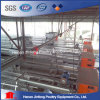 Automatic Chicken Cage System From China / Jaulas Pollos