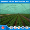 Green HDPE Sun Shade Netting for Agriculture Windbreak