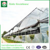 PC/Glass/Film Greenhouse with High Quality and Favorable Price