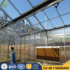 Made in China Multi Span Plastic Film Greenhouse for Agricultural