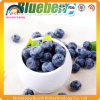 Blueberries Extract Powder
