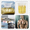 99% Purity Muscle Building Steroids Testosterone Enanthate CAS: 315-37-7