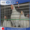 Chinese Wholesale Chicken Cage Bird Cage for Sale in Pakistan