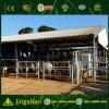 Prefab Steel Strucure Cow Shed
