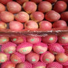 Chinese Fruit Fresh Qinguan Apple