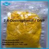 Fat Burning Supplement DNP 2, 4-Dinitrophenol Weight Loss Powder 2, 4-Dinitrophenol