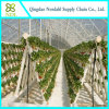Film Hydroponic Green House Supplier for Vegetable Flower Planting
