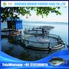 High Yeild Tilapia Fish Cage Floating