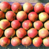 Chinese Fresh Red Apple