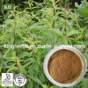 Lemon Verbena Extract Spec: 12: 1; 20: 1
