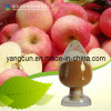 Natural Apple Extract Apple Polyphenol 80%