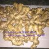New Crop Shandong Origin Air Dry Ginger