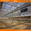 Hot Sale Multi-Span Greenhouse with Glass Covered