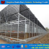 Agriculture Commercial Vegetable Used Plastic Film Greenhouse