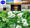 Amino Acid Liquid Fertilizer Real Manufacturer