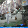 Cattle Slaughtering Plant Equipment for Wholesale