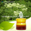 Angelica P. E (CAS: 4431-01-0) Angelica Extract
