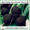 Natural China Origin Black Radish Seed Powder Extract