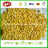 IQF Frozen Super Sweet Corn with Top Quality
