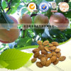 Pure Herbal Medicine Peach Kernel Semen Persicae