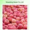 Fresh FUJI Apple 2015 New Shandong FUJI Apple Best Price