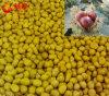 Wholesale Frozen Peeled Chestnuts