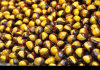 2017 Good Fresh Chestnut for Exporting