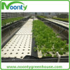 Farm Dft Hydroponics System for Vegetable Growing
