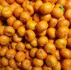 Fresh 3.8-4.0cm Nanfeng Baby Mandarin
