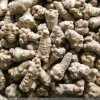 Factory Supply Sanchi Extract Notoginseng Taproot Affinal Drug and Diet