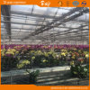 Tempered Glass Greenhouse for Russia Market China Supplier