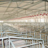 High Quality Steel Structure Pig Shed and Breeding Equipment
