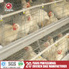 Poultry Equipment with Automatic Drinking System