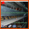 Jinfeng High Quality H Type Automatic Chicken Cage