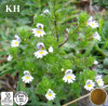 Manufacture High Quality Eyebright Extract 10: 1 Flavone