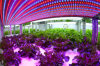 Full Spectrum LED Grow High Power Light for Plant Factory