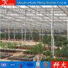 Galvanized Pipe Economic Tunnel Flower Greenhouse for Sale