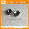 "Stainless Steel Golden Supplier Ss 304 5/16"" K Cap Nut"