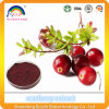 Cranberry Extract with Anthocyanin