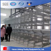 H Type Poultry Battery Cage for Big Poultry Farms/ Automatic Chicken Cage in Malaysia